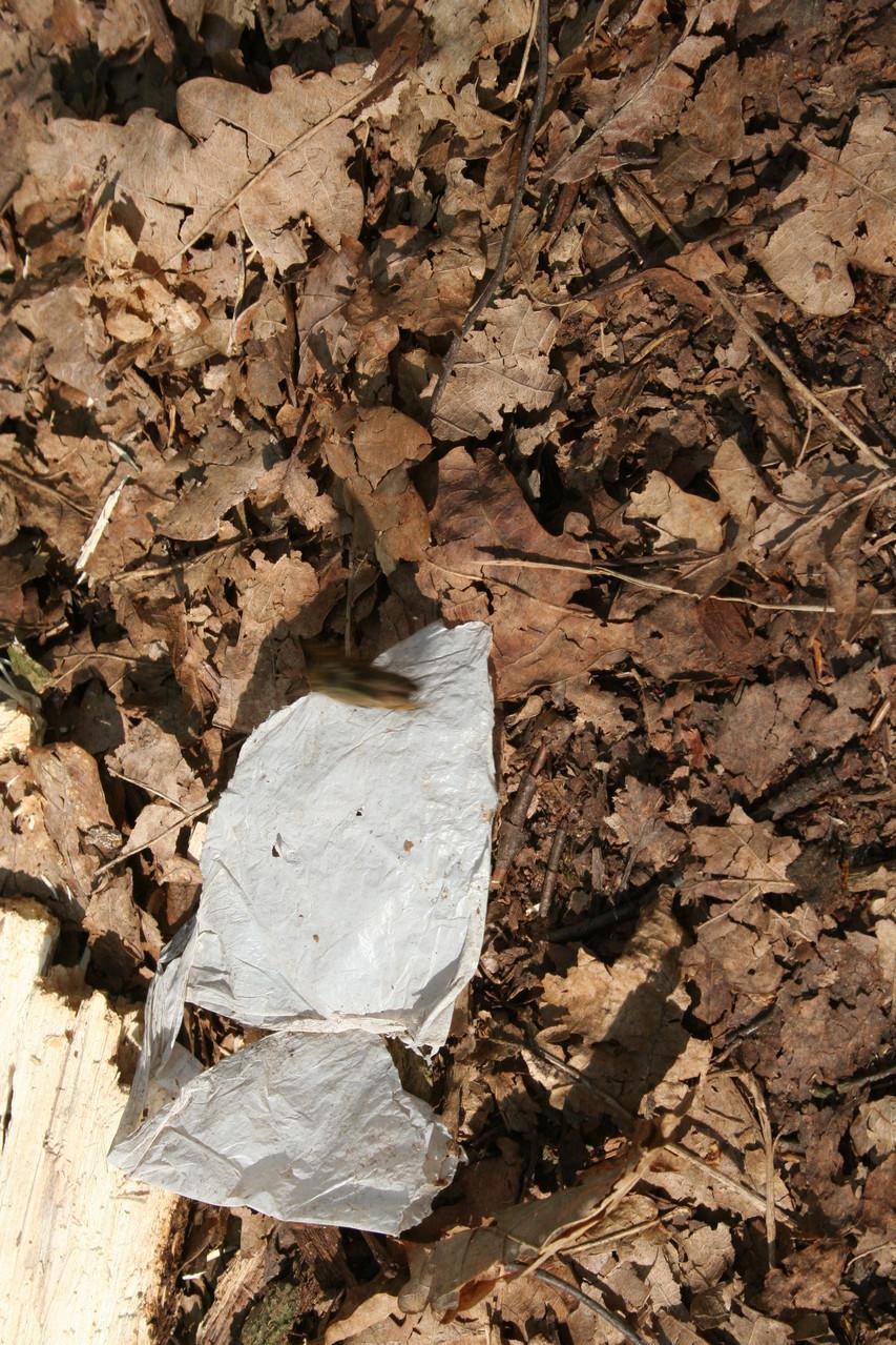 Müll hat doch nichts im Wald zu suchen