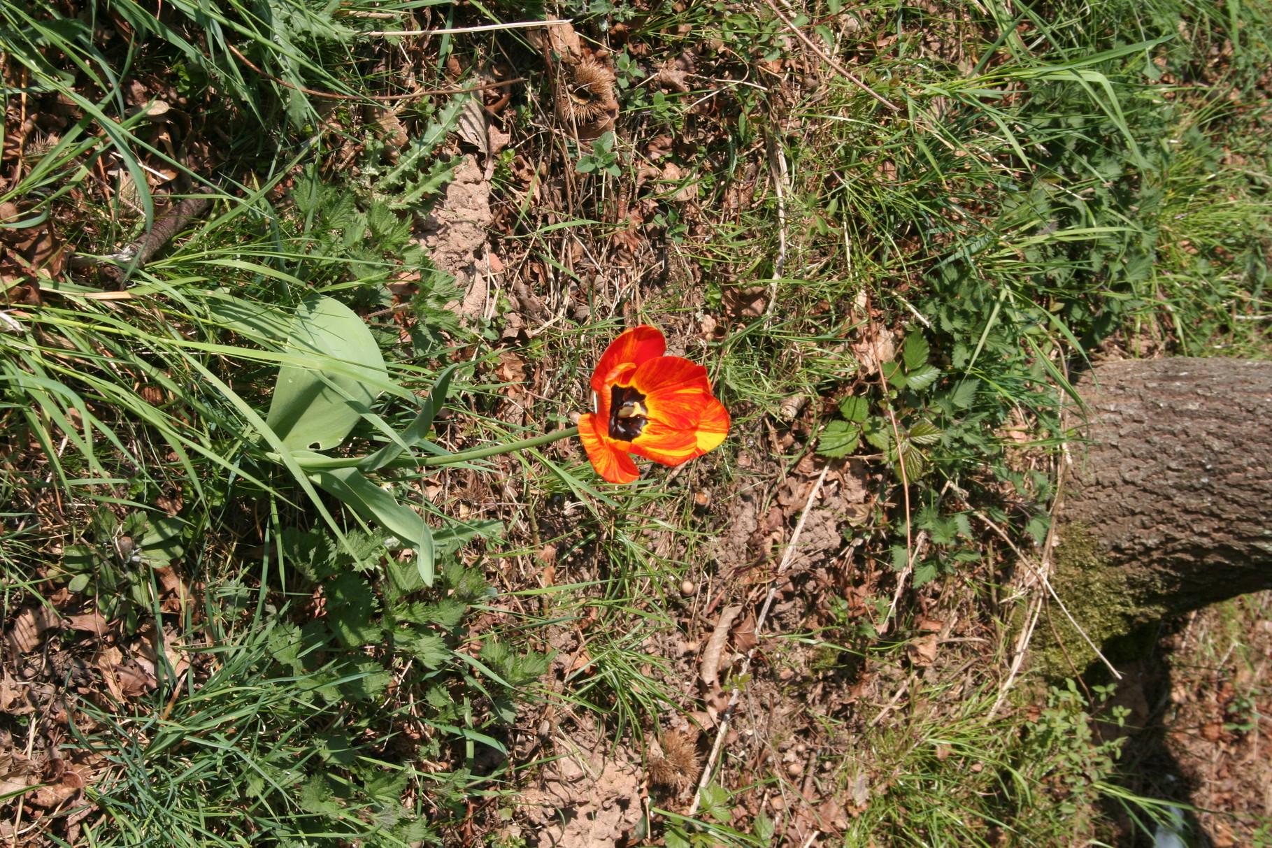 Ganz alleine und verlassen steht diese Blume da.