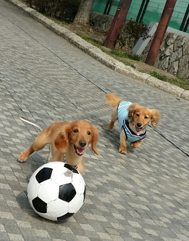 お友達とのボール遊びで元気いっぱい(*^-^*)