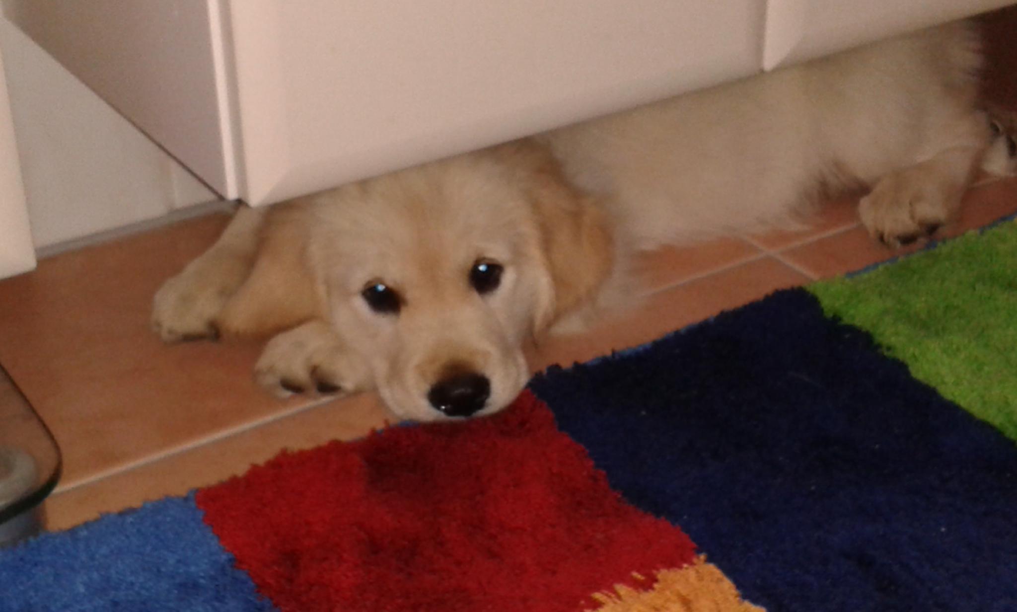 Ein kühles Plätzchen unterm Badezimmerschrank...