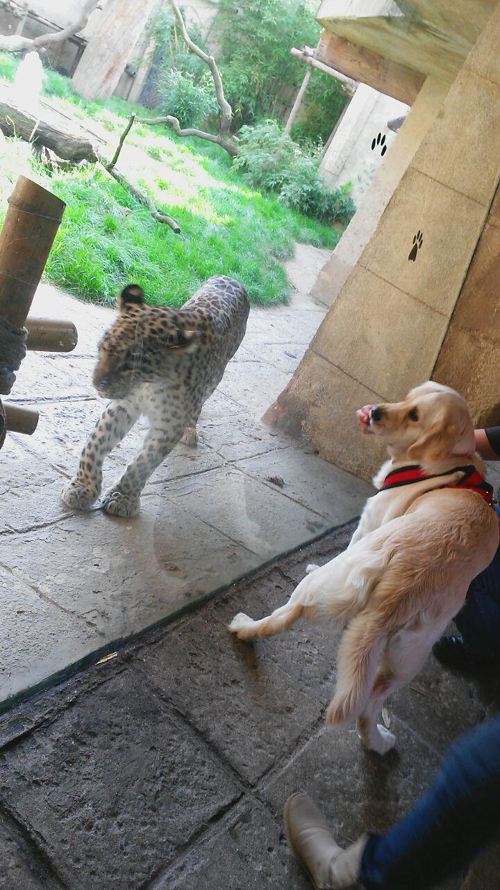 """Der Leopard im Zoo Hannover wollte Xani zum Essen """"einladen""""."""