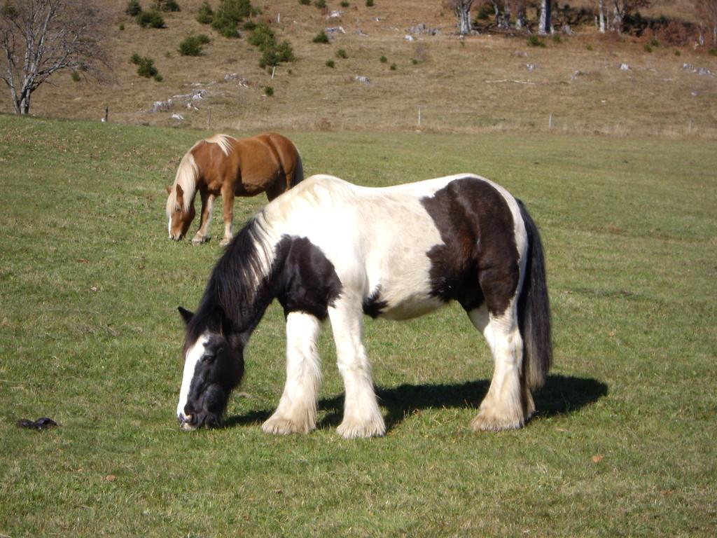 Pferdeweide hinter dem Hotel Arnica