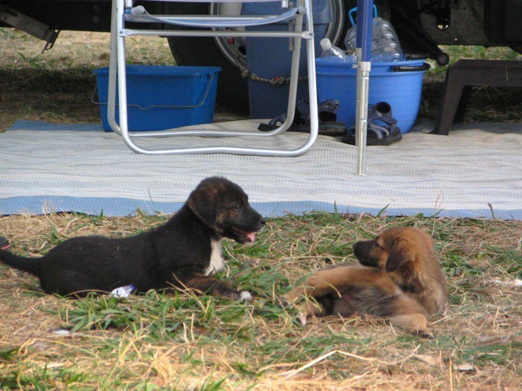 2 von 3 Platzhunden