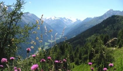 Panorama summer