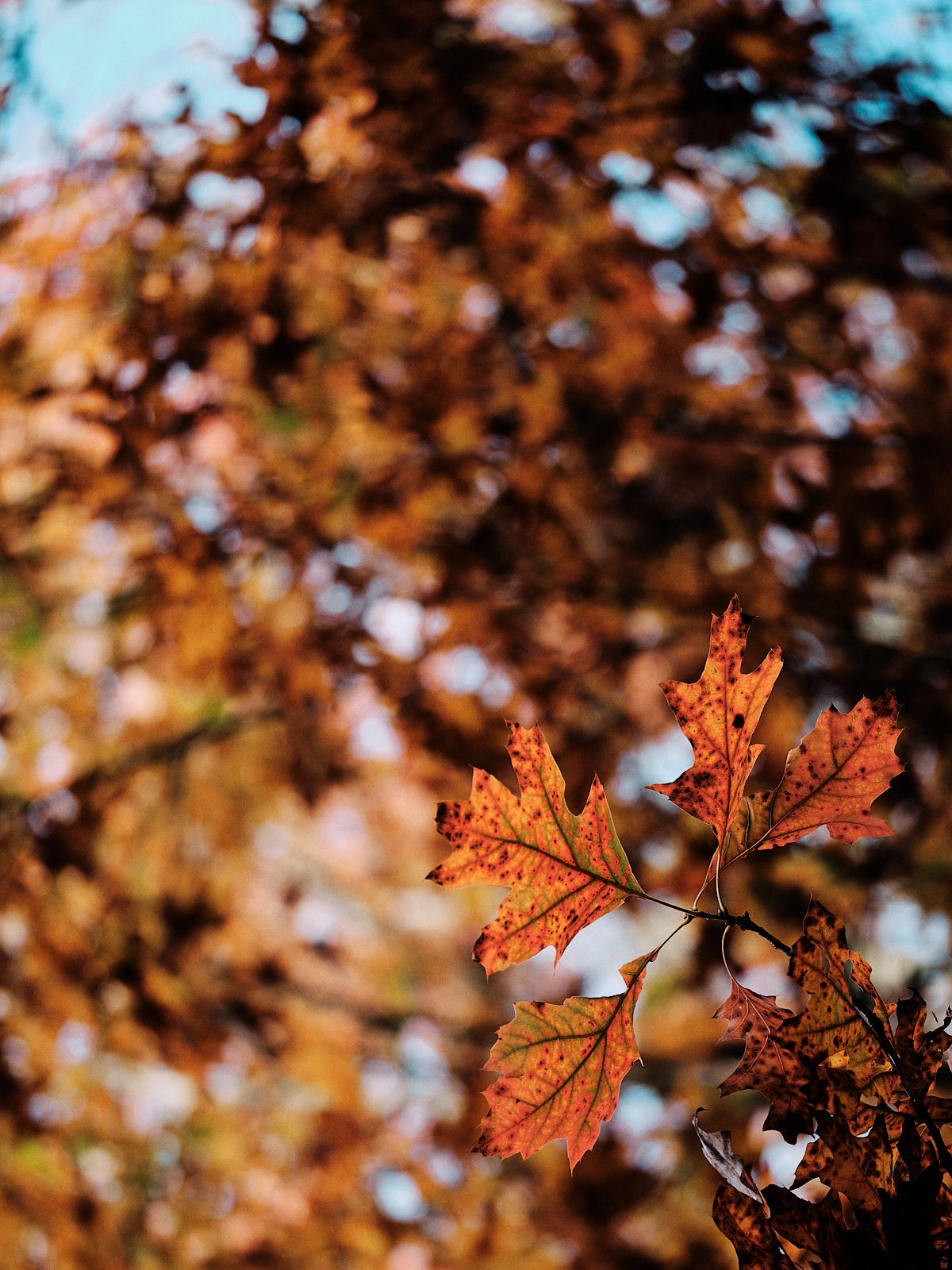 ©Stephane Moreau Photographe - Le Parc du Martreil - Anjou