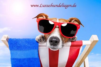 Hund ohne Luxushundeliege