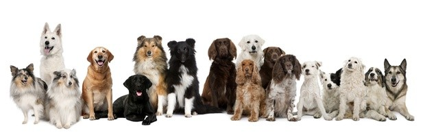 für jeden Hund die richtige Luxushundeliege