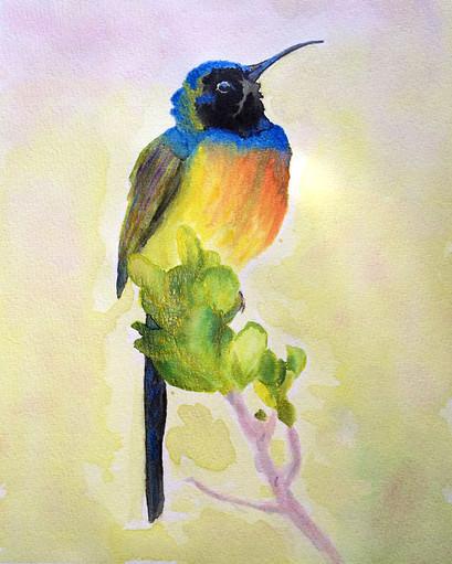 Vogel Colibri aquarel Art met twinkling effect