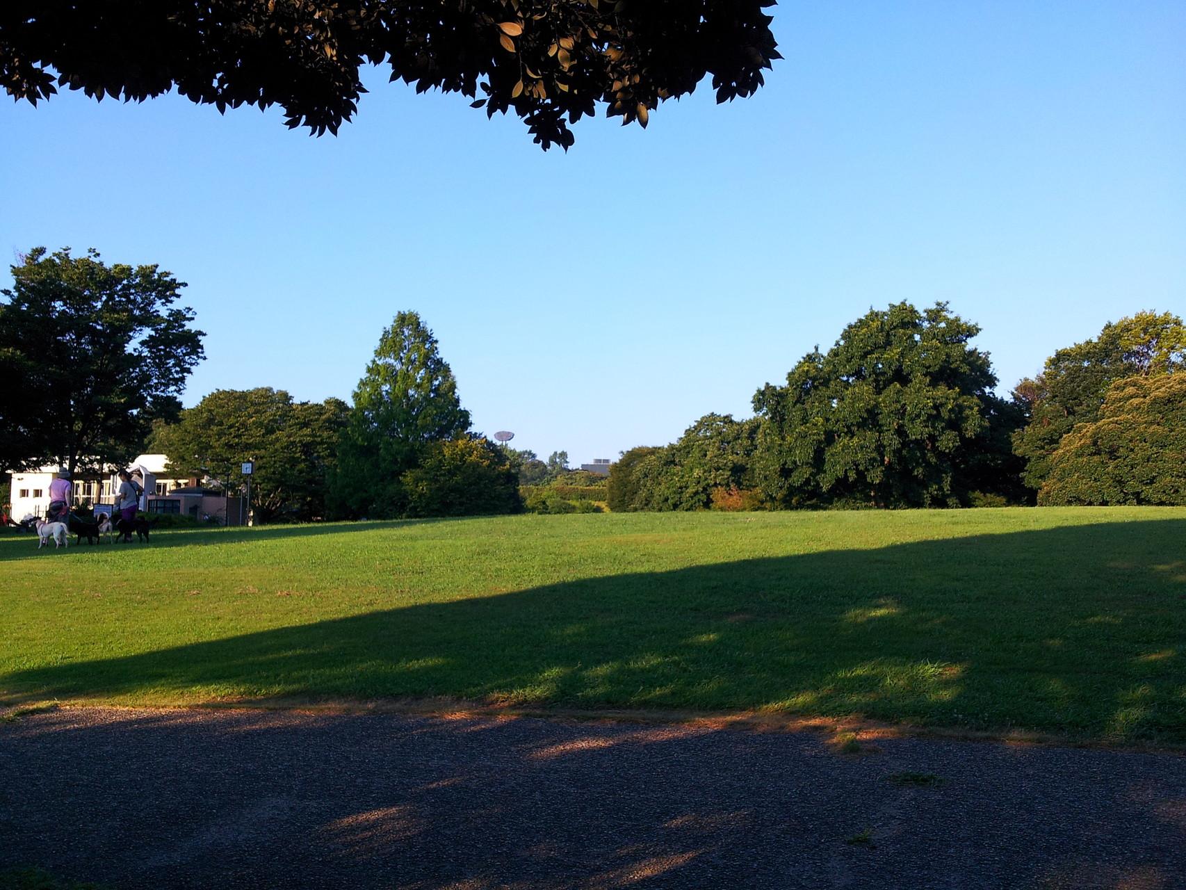 緑が綺麗なプレィグラウンド、中央遠方に保土ヶ谷球場が見える
