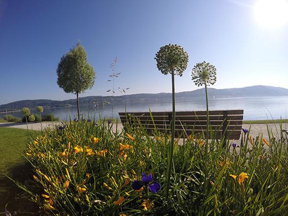 Uferanlagen in Bodman