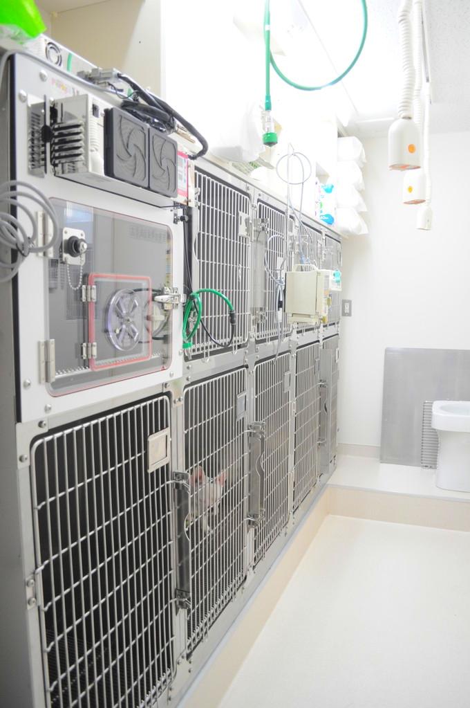 犬舎:ICUを完備し、10頭まで入院できます。空調により24時間快適です。