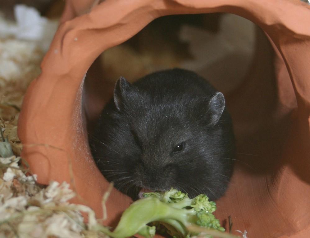 Miam Broccoli