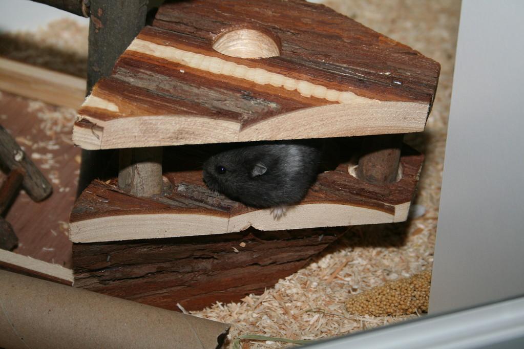 Die Hamster klettern gerne auf dem Piratenschiff Ansgar herum.