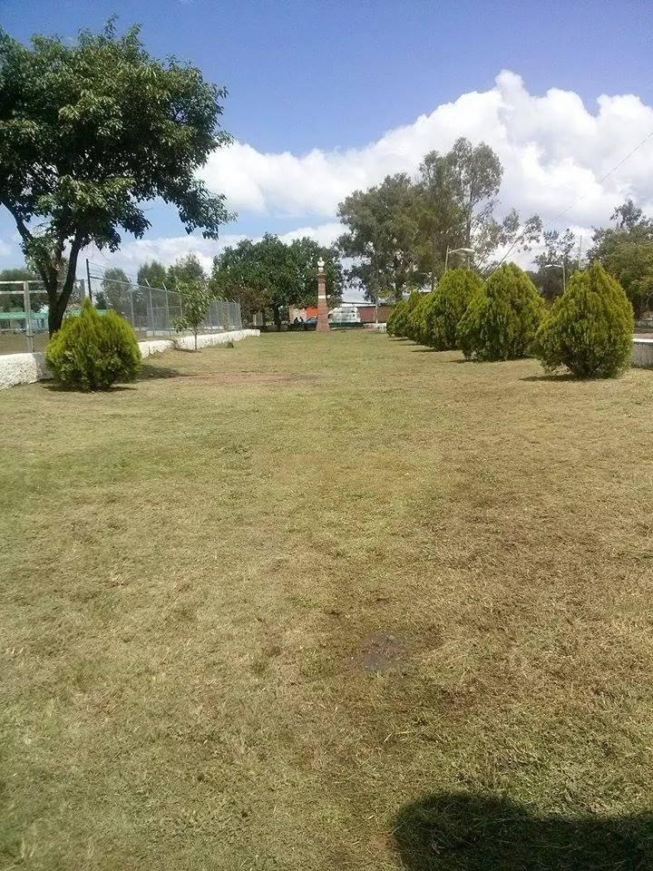 Parque después de la limpieza