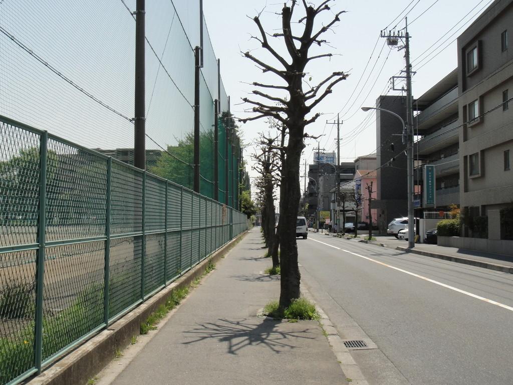 左手に大和中学校のグランド。あと一つ信号を越えると保育園です