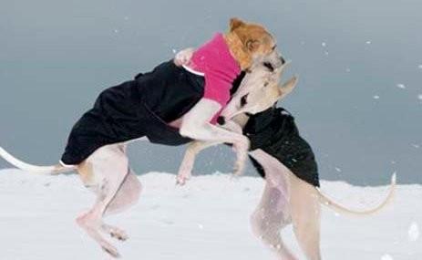 Chilly Dogs Great White North in Schwarz mit Pink