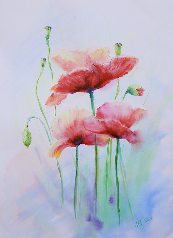 Red Poppy2. Watercolor on paper. 30x40 cm. 2014. Sold