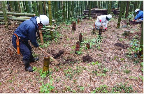 雨の中、タケノコ掘りに夢中。(2019/04/30 竹林整備の活動)