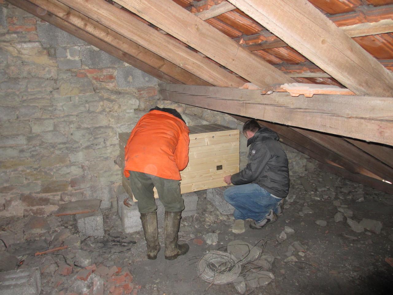Anbringen von einem Schleiereulennistkasten in einem Dachgeschoss