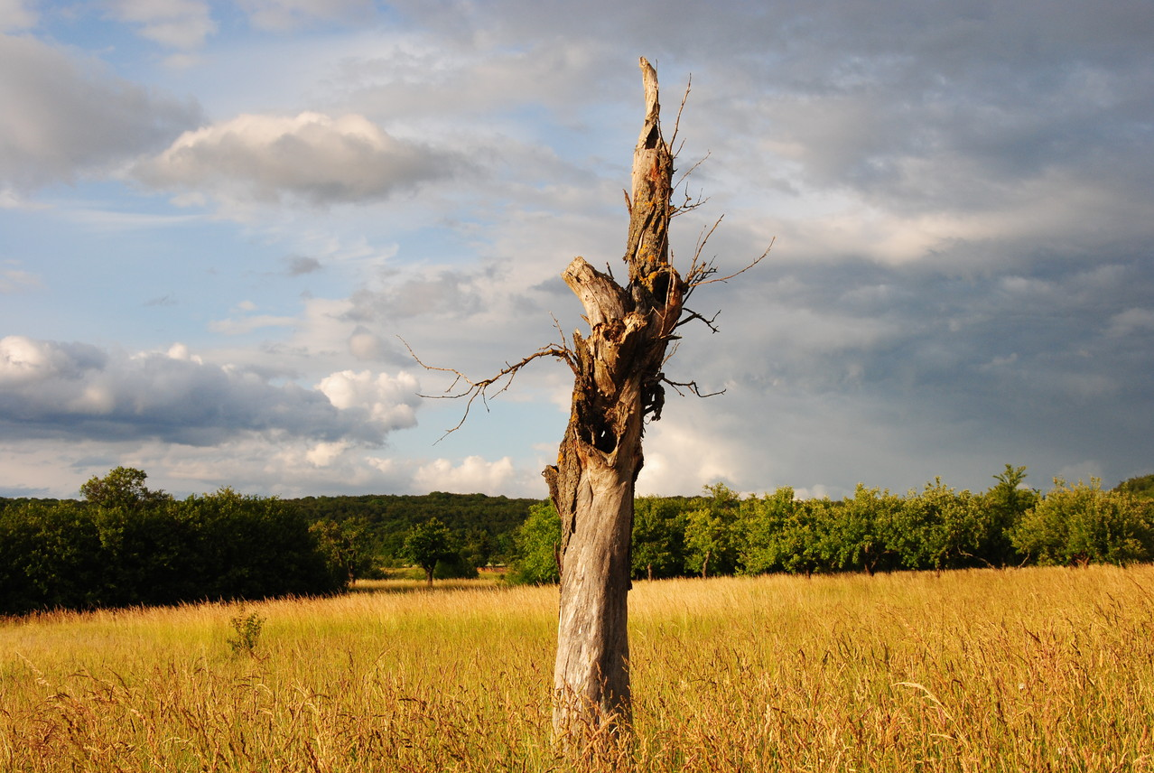 Biotopholz im Kleinblittersdorfer Streuobstgürtel