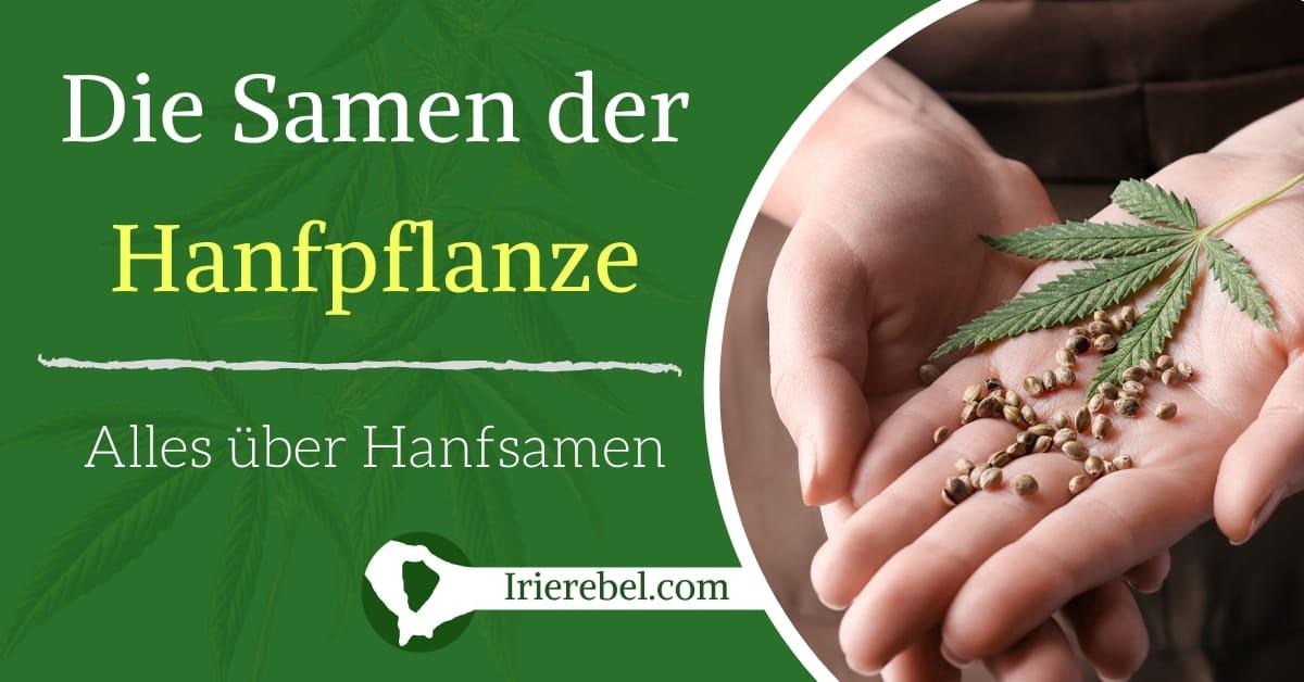 Hanfsamen – Alles über den Samen der Hanfpflanze