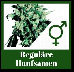 Reguläre Hanfsamen bzw. Cannabis Samen