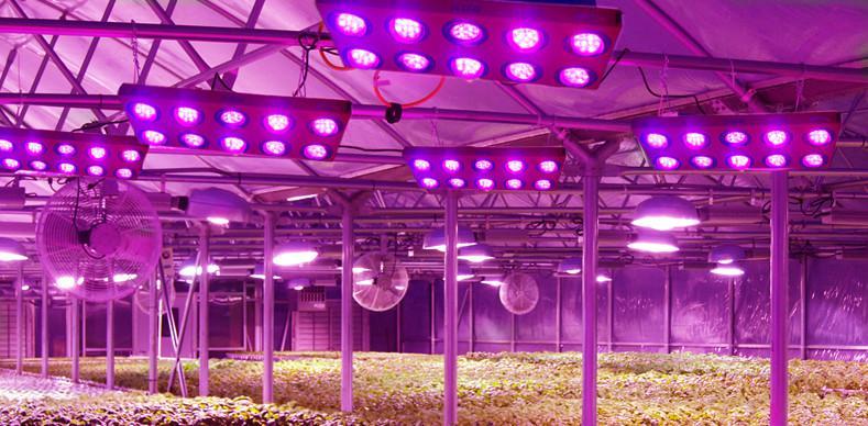 Unterschiede in Preis und Qualität in LED