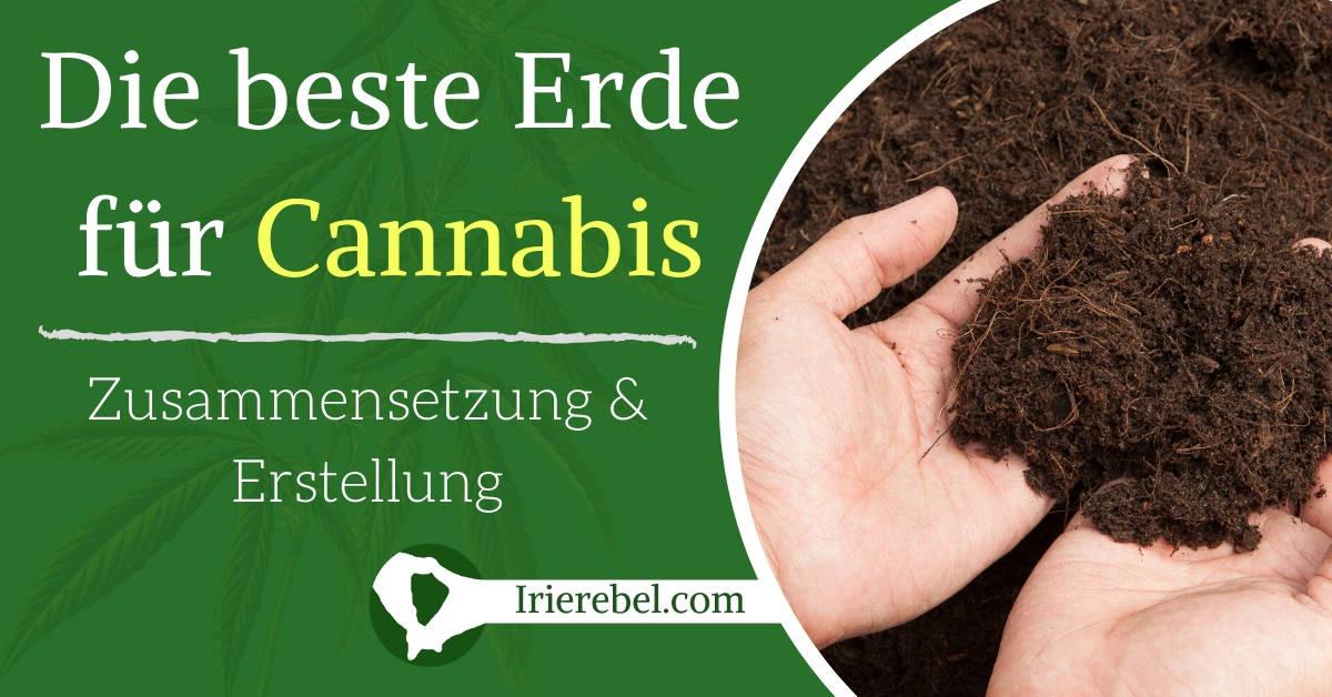 Die beste Erde für Cannabis