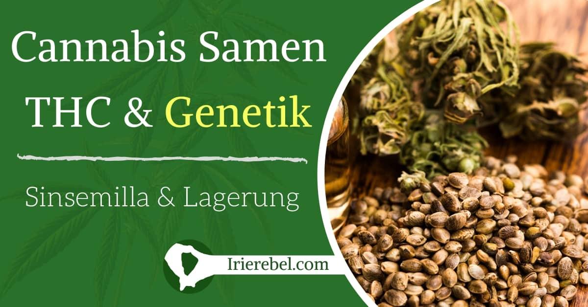 Zu Cannabis Samen, dem THC-Wert, der Genetik & der Lagerung