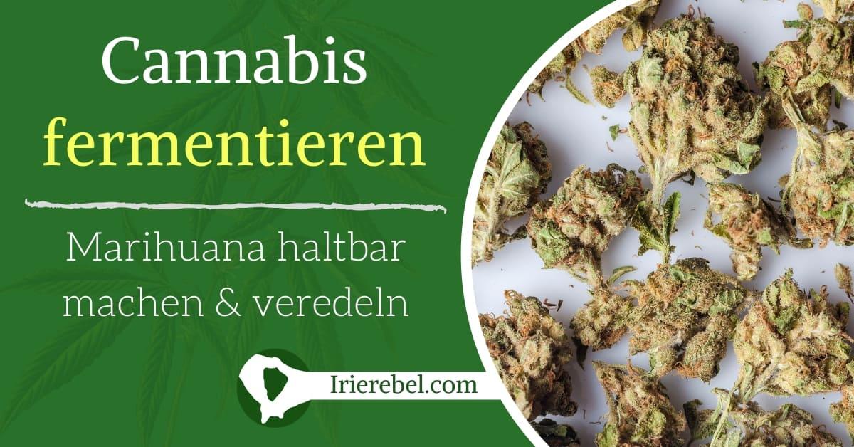 Cannabis fermentieren - Marihuana haltbar machen & veredeln