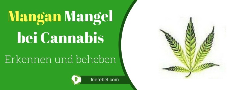 Mangan Mangel bei Cannabis - erkennen und beheben
