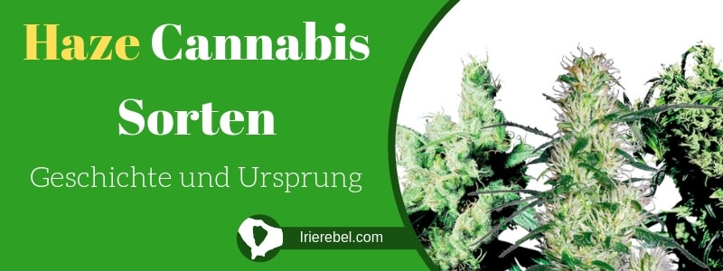 Was sind Haze Cannabis Sorten - Geschichte und Ursprung