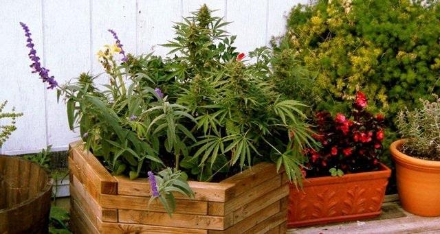 Tarnen Sie Ihre Pflanzen