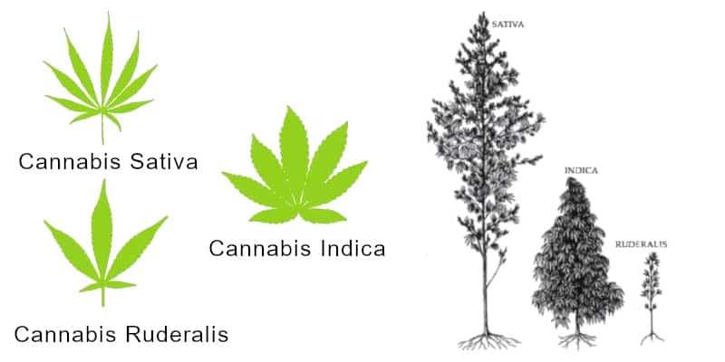 Die unterschiedlichen Hauptgattungen & Hybride