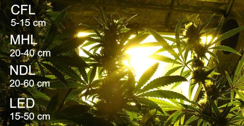 Abstand zwischen Lampe und Pflanze
