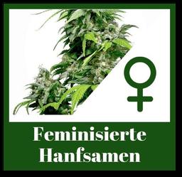 Feminisierte Hanfsamen bzw. Weibliche Cannabis Samen