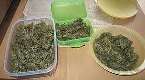 Cannabis Blüten in Verpackung