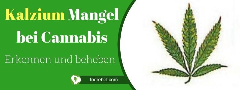 Kalzium Mangel bei Cannabis - Erkennen und beheben
