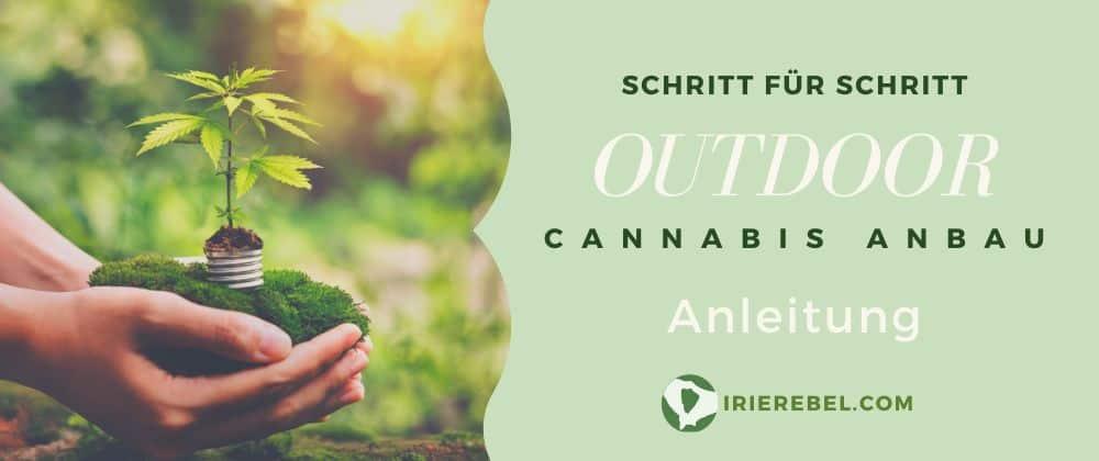 Cannabis Outdoor Anbau Anleitung komplett
