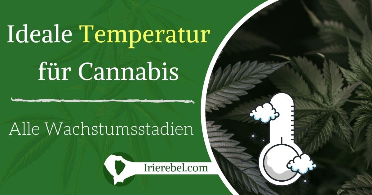 Die ideale Temperatur für Cannabis - Alle Wachstumsstadien