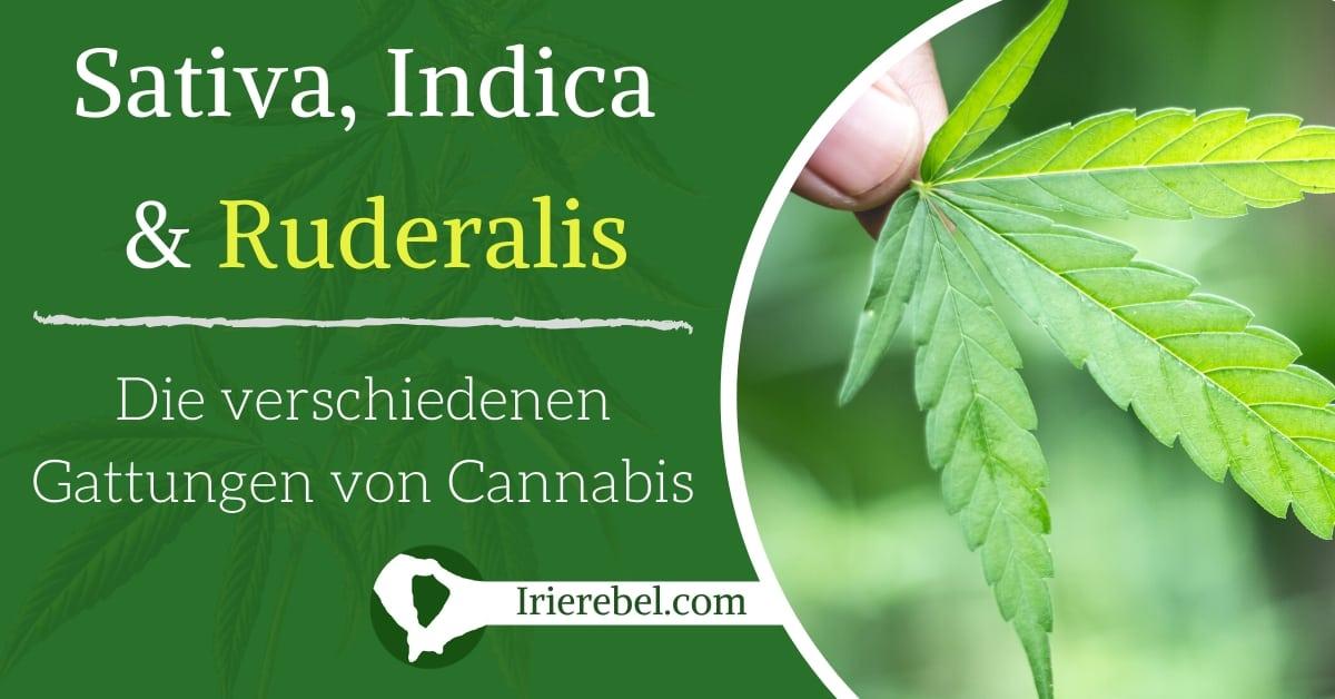 Die Arten von Cannabis & Hanfsamen - Sativa, Indica & Ruderalis