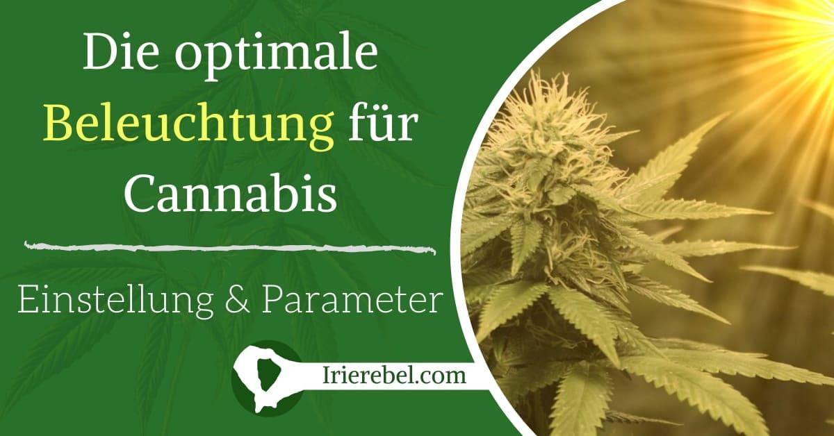 Die optimale Beleuchtung für Cannabis Pflanzen