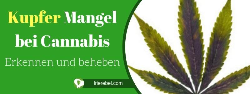 Kupfer Mangel bei Cannabis