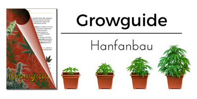 Growguide - Hanfanbau Anleitung