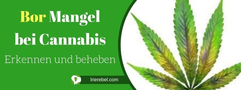 Bor (B) Mangel bei Cannabis - Erkennen und beheben
