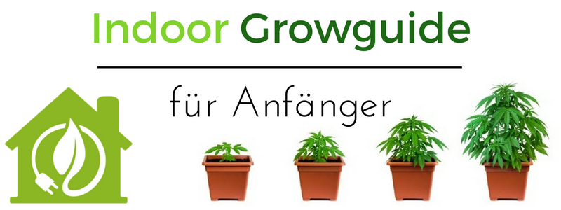 Indoor Hanfanbau Growguide