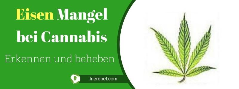 Eisenmangel bei Cannabis erkennen und beheben