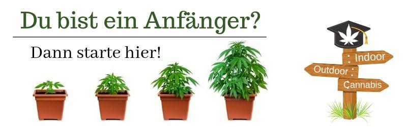 Du bist Anfänger Cannabis Züchter - Starte Hier!