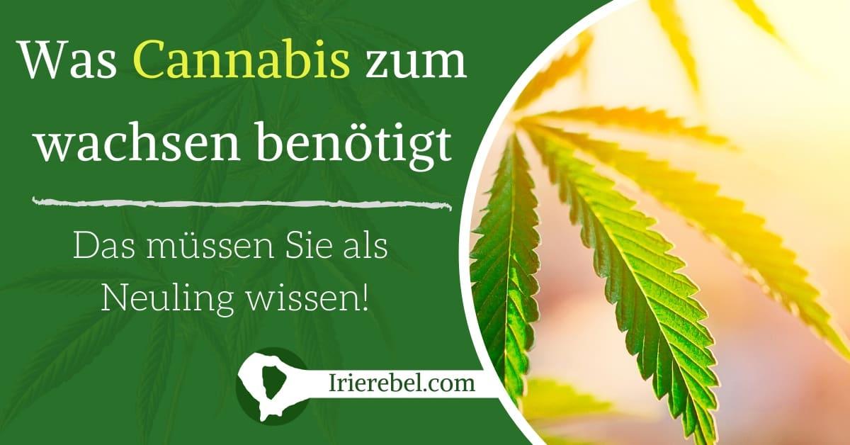 Was braucht eine Cannabis Pflanze zum wachsen?