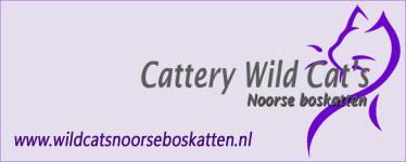 Wild Cat's Noorse boskatten